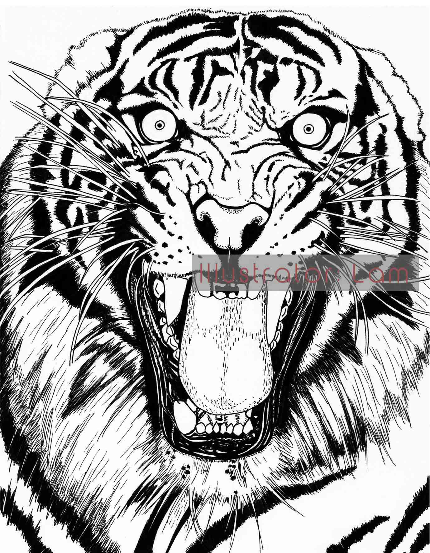 Line Drawing Of Tiger Face : Tiger face sketch